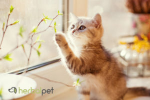 Cat touching cannabis plant_minified