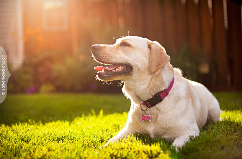 TOP TIPS ON GIVING YOUR PET CBD