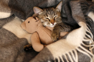Herbal Pet CBD Tincture for Cats