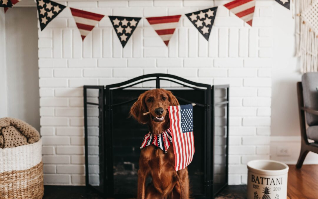Helping Your Pet this Fourth of July