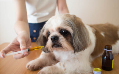 Improving Your Pets Health With CBD