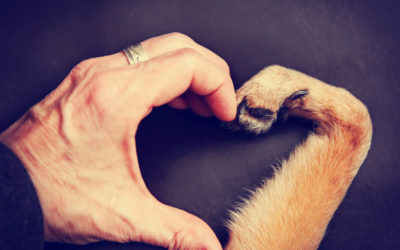 For The Love – Using CBD To Help Your Pet's Heart