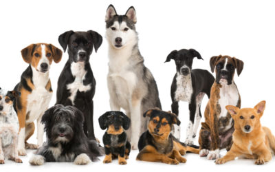 What Dog Breed is Best for You and Your Lifestyle?