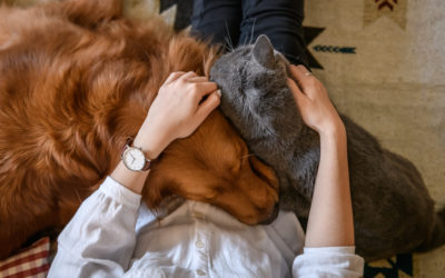 Dog & Cat Mom Mother's Day Gift Guide